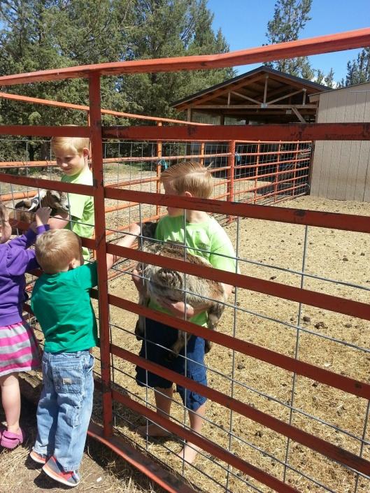 Goats Petting
