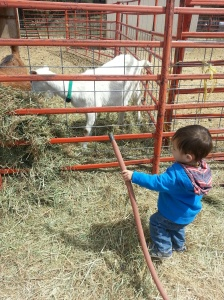 Goats Water Hose